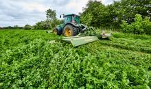 Alfalfa – Queen of Forage Crops and King of Drought Tolerance