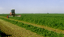 Grow alfalfa to be less reliant on global protein prices