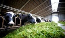 Do you want happier cows and improved profitability?