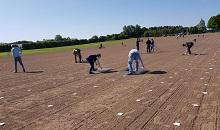 6,500 turf plots sown by hand and with care