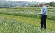 Get more from your grassland with top-performing mixtures