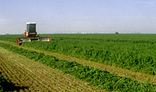 Easy-to-grow alfalfa is good for farm profitability