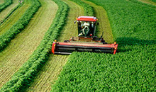 Alfalfa improves farm profitability