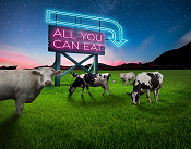 Picture of cows with a sign that says all you can eat. It is a link to a web page about more milk with DLF