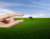 Grass background with a hand that is holding a seed. Link to the DLF web page PLUS- Festulolium
