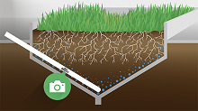 How deep root mass can help fight drought