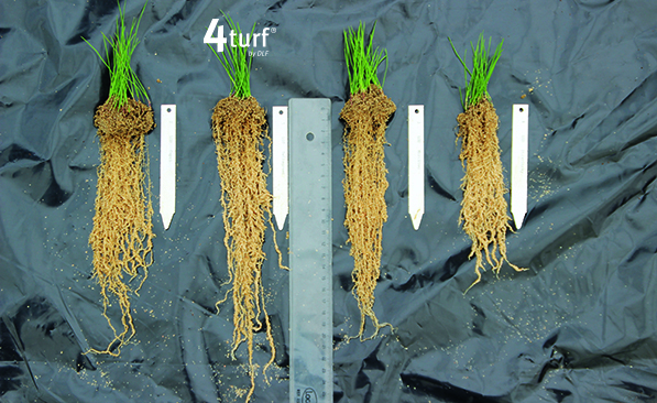 4turf® roots deep roots