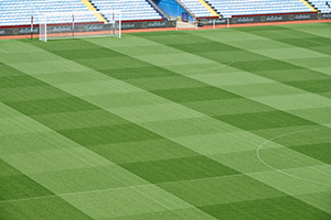 Professional football pitch of high purity and quality grass seeds