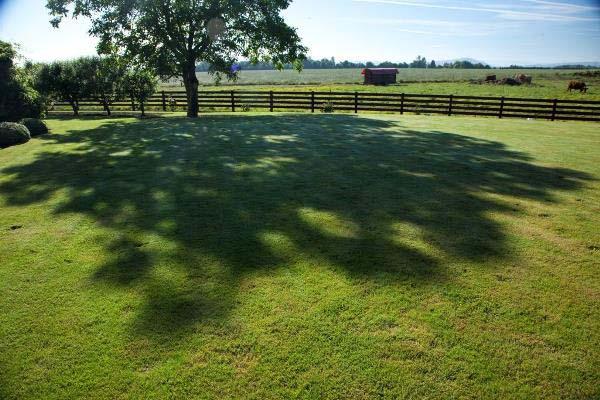 shade lawns