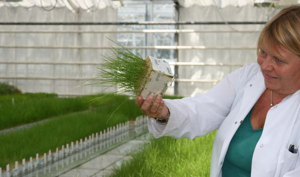 Salt-tolerance backed by science. Woman holding a grass test